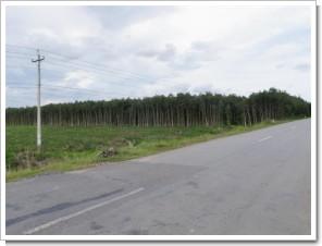 ForestMocHoa.JPG