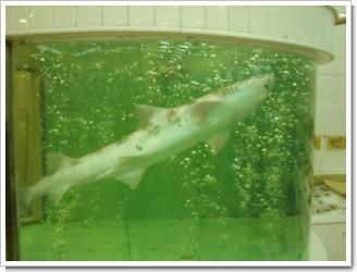 Fuzhou_Shark.JPG