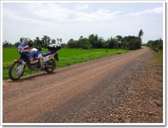 Africa_COW2.jpg